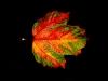 DW-Studio-Herbstlaub-039