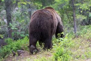 Bears End
