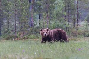 Noch ein Bär